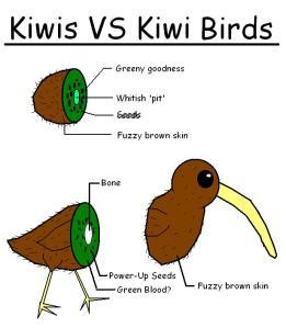 Kiwi_VS_Kiwi_Bird_by_shibbynempahcold